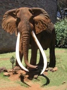 Ahmed Elephant