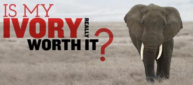 Is Ivory really worth it