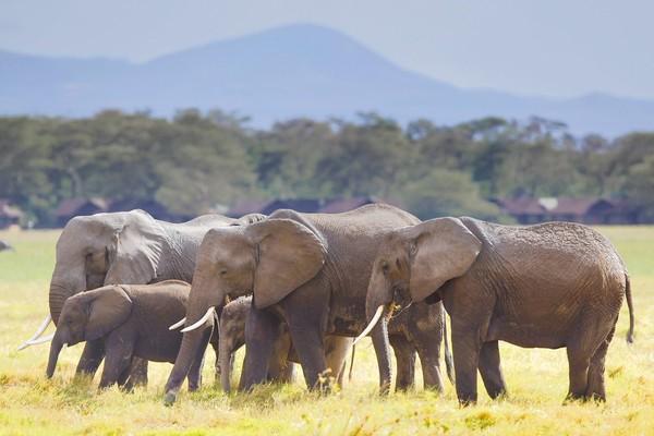 Wildlife census